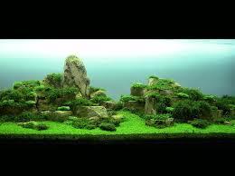 Aquascape Com 258 Best Aquascape Images On Pinterest Aquarium Ideas