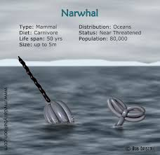 a z of endangered species u2013 narwhal
