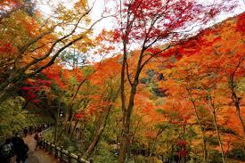osaka u0027s 5 best spots to admire autumn leaves in 2017 matcha