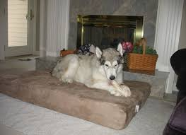 Barker Dog Bed Harry Barker Toile Canvas Round Dog Bed Dog Beds And Costumes