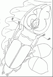 bug coloring pages coloringsuite com