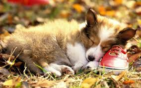 cute fall wallpaper hd corgi wallpaper hd u2013 wallpapercraft