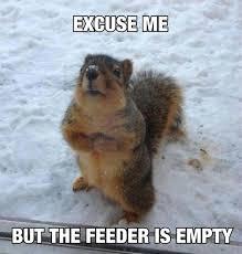 Squirrel Nuts Meme - hilarious squirrel nuts meme wallpaper quotesbae