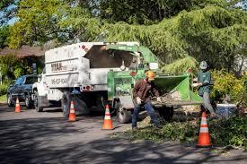 tree service clean up sacramento s best tree care arborist