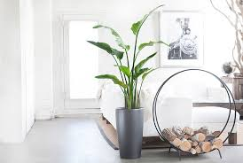 Fragrant Indoor Plants Low Light - 10 best indoor plants for men gear patrol