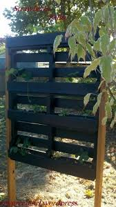 strawberry pallet planters for fresh strawberries photograph how