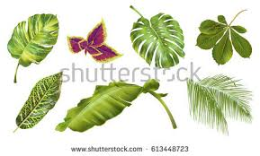 Tropical Plant Biology - botany stock images royalty free images u0026 vectors shutterstock