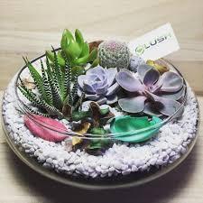 ready made mid range terrariums succulent cactus fittonia