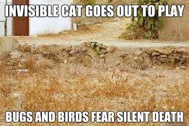 Invisible Cat Memes - invisible cat memes quickmeme