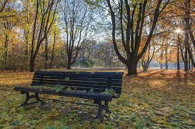 bench berlin park bench in tiergarten berlin photograph by stefan mazzola