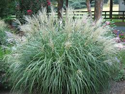 landscaping with ornamental grasses plant cool landscaping with
