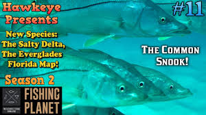 Everglades Florida Map by Fishing Planet S2 Ep 11 New Species The Common Snook Of The