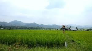 crazy mountains and rice field views in pai thailand 2016