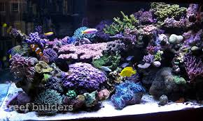 led lights for coral tanks orphek nilus multicolor led light tested and reviewed over a mature