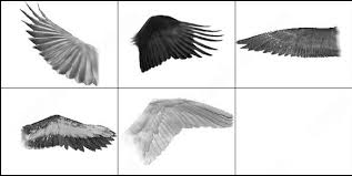 eagle wings photoshop brushes download 31 photoshop brushes for