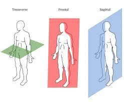 Directional Terms Human Anatomy Citlalpilliyhelena Anatomy