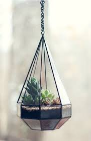 hanging terrarium ideas for air plants and succulents a simple