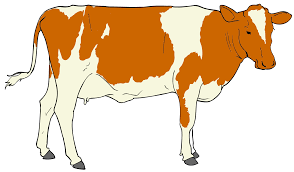 cow clipart with transparent background clipart panda free