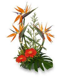 modern tropical designs hestands floral portales nm