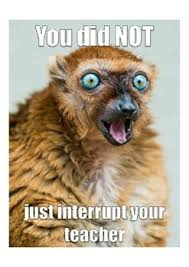 Classroom Rules Memes - classroom poster classroom rules and procedures animal memesa fun