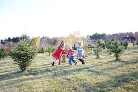 christmas tree farm greenwood tree farm