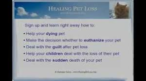 coping with loss of pet how to get the loss of a pet coping with grief