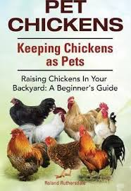 Can You Have Chickens In Your Backyard Pet Chickens Keeping Chickens As Pets Raising Chickens In Your