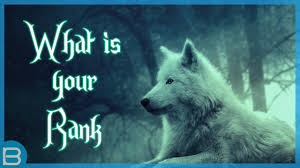what is your rank in a wolf pack