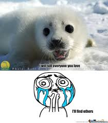 Harp Meme - baby harp seal by beetledrive meme center