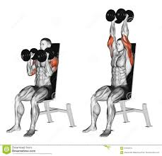 bent over two arm dumbbell row exercise 01 espalda pinterest
