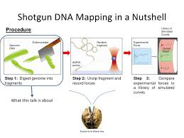 dna mapping the biological preparation of shotgun dna mapping 5 15 09