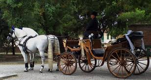 bianchi carrozze carrozza con cavalli bianchi di il cocchiere ancona foto 8