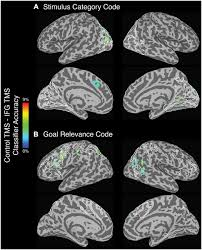 frontiers the effect of disruption of prefrontal cortical