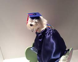 dog graduation cap and gown dog graduation gown etsy