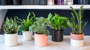 low light indoor trees fluorescent lights bright office plants fluorescent light 39