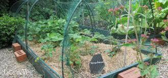 using organic mulches in the vegetable garden