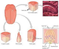 14 1 sensory perception anatomy and physiology