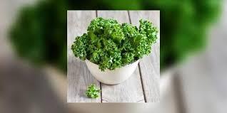 comment cuisiner le kale le kale un chou tendance comment choisir conserver et cuisiner le
