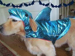 Dog Shark Halloween Costume Halloween Costumes Dogs Close