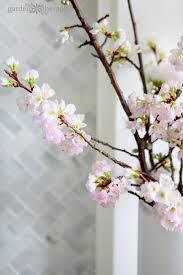 forcing flowering cherry blossom branches garden therapy