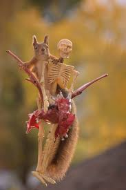 here u0027s how squirrels celebrate halloween veriy