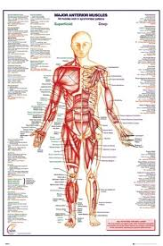 Online Human Body Human Body Posters Buy Online At Popartuk Com