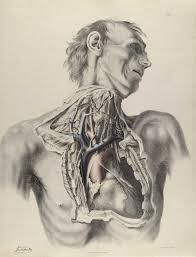 Human Body Chest Anatomy Historical Anatomies On The Web Richard Quain Home