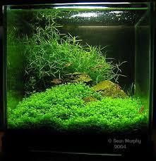 Aquascape Maintenance Aquascape Aquarium Freshwater Aquarium Plants For Beginners