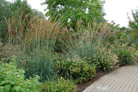 10 favorite ornamental grasses for midwest landscaping