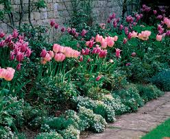 Fragrant Plants For Pots - sweetly scented annuals fine gardening