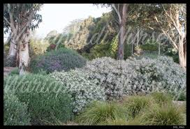 native plant nursery adelaide plants for clay soils native plant and revegetation specialists
