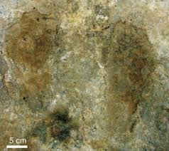 study sheds new light on peopling of tibet archaeology sci