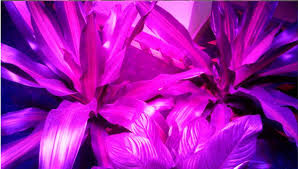 ufo led grow light led grow light 200w ufo led plant grow light led emitting diode