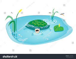 cartoon turtle swimming swamp drawing kids stock vector 212551654